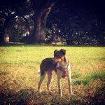 Savannah, Canine Distemper Virus