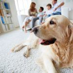 Pet Friendly Apartments in Charlotte