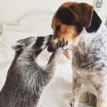 10 Animal Instagram Accounts Worth Following