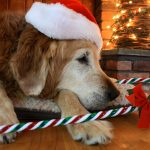 The Ultimate Pet Holiday Gift Guide