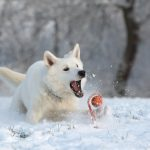 Dogercise: Keeping Your Dog Fit This Winter