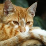 Declawing Your Cat: Here are the Alternatives