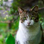 Canine & Feline Tick Prevention
