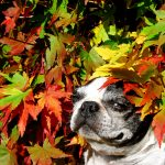Fall Pet Health