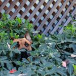 Pets & Toxic Plants