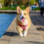 Dog Friendly Spots in Charlotte