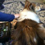 Animals and Acupuncture