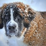 Winter Weather & Pet Safety