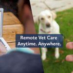 Remote Pet Care at IVC