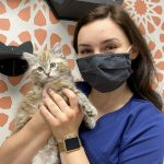 Annual Wellness Visits for Cats and Dogs