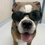 Welcome to HealingPups: Canine Rehabilitation